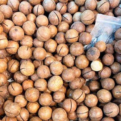 Macadamia China